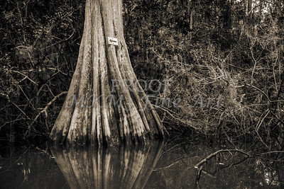600 .1861 Caddo Lake in Black adn White