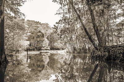 602 .1861 Caddo Lake in Black adn White