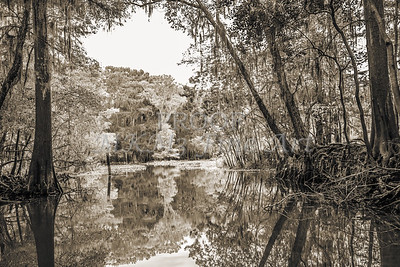 601 .1861 Caddo Lake in Black adn White