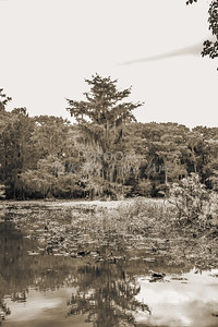 607 .1861 Caddo Lake in Black adn White