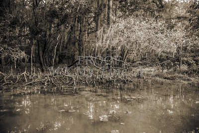 606 .1861 Caddo Lake in Black adn White