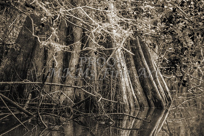 599 .1861 Caddo Lake in Black adn White