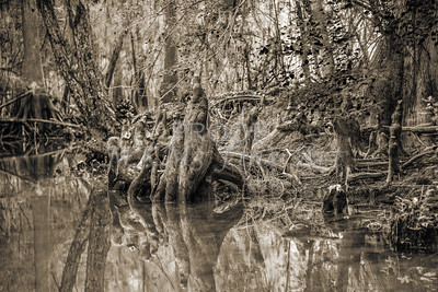 598 .1861 Caddo Lake in Black adn White
