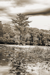 609 .1861 Caddo Lake in Black adn White