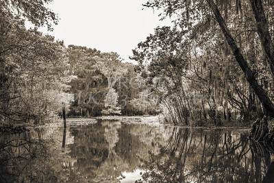 603 .1861 Caddo Lake in Black adn White