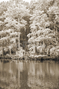 506 .1861 Caddo Lake in Black adn White