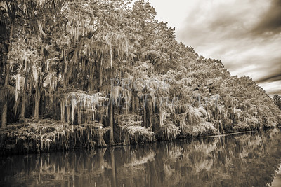 514 .1861 Caddo Lake in Black adn White
