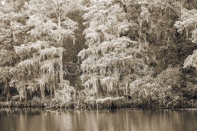 507 .1861 Caddo Lake in Black adn White