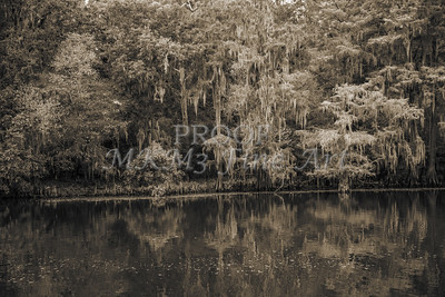 500 .1861 Caddo Lake in Black adn White