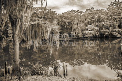 504 .1861 Caddo Lake in Black adn White