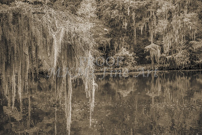 501 .1861 Caddo Lake in Black adn White