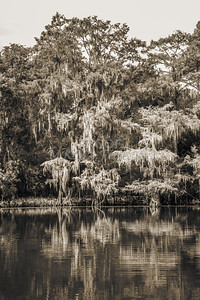 509 .1861 Caddo Lake in Black adn White