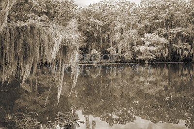 505 .1861 Caddo Lake in Black adn White