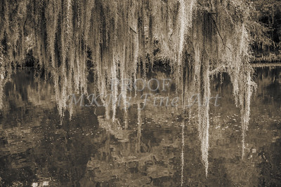 502 .1861 Caddo Lake in Black adn White