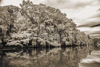 511 .1861 Caddo Lake in Black adn White