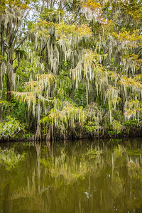 013 .1861 Caddo Lake in Color