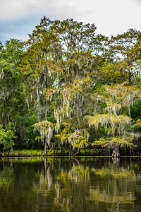 011 .1861 Caddo Lake in Color