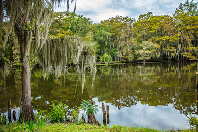 005 .1861 Caddo Lake in Color