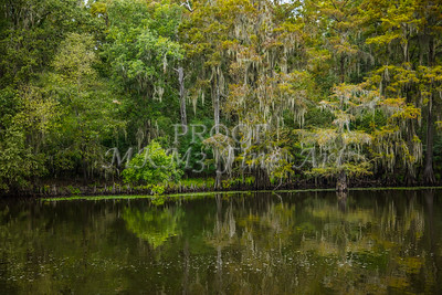 001 .1861 Caddo Lake in Color