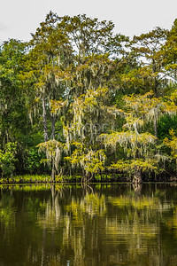 010 .1861 Caddo Lake in Color