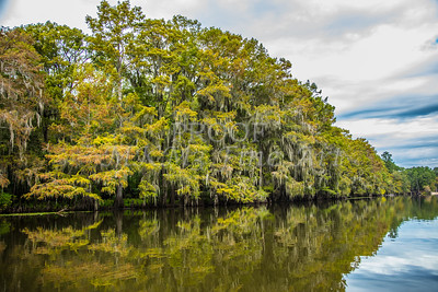 012 .1861 Caddo Lake in Color
