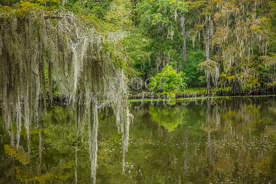 002 .1861 Caddo Lake in Color