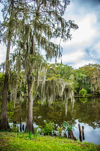 004 .1861 Caddo Lake in Color