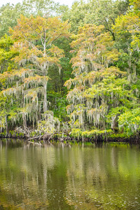 007 .1861 Caddo Lake in Color