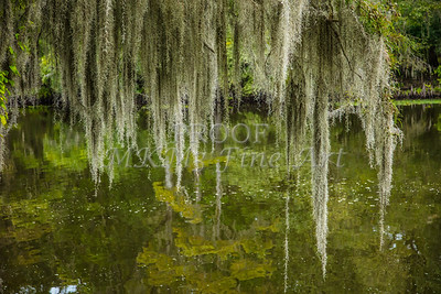 003 .1861 Caddo Lake in Color