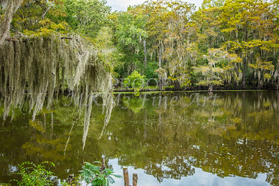 006 .1861 Caddo Lake in Color
