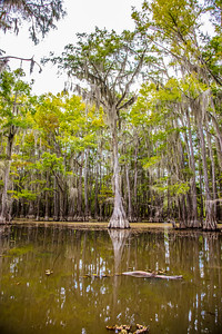 231 .1861 Caddo Lake in Color