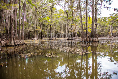 227 .1861 Caddo Lake in Color
