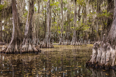 221 .1861 Caddo Lake in Color