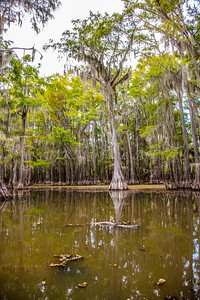 230 .1861 Caddo Lake in Color