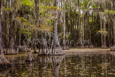 235 .1861 Caddo Lake in Color