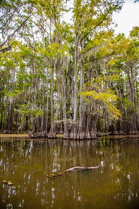 232 .1861 Caddo Lake in Color