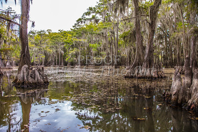 223 .1861 Caddo Lake in Color