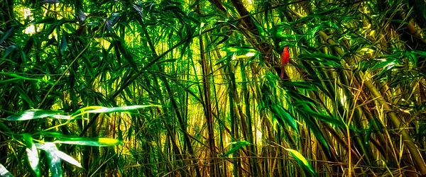 Bamboo Forrest with Cardinal