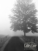 Foggy Morning - Cades Cove, Great Smoky Mountains National Park