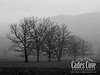 Trees - Cades Cove, Great Smoky Mountains National Park