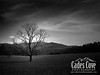 The Tree - Cades Cove, Great Smoky Mountains National Park