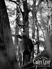 Curious - Cades Cove, Great Smoky Mountains National Park