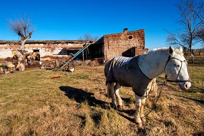 Caballito ranchero