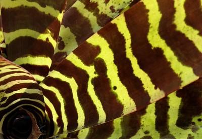 Tigre vegetal