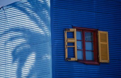 Palmera ventana