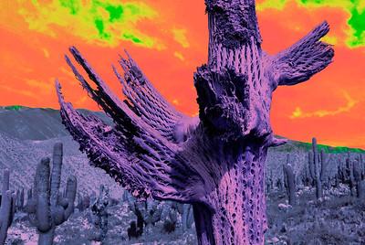 Delirius cactus