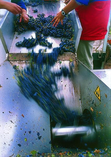Molienda de uvas,  Mendoza, Argentina