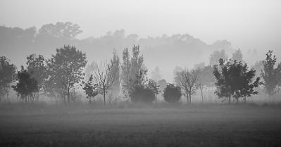 Neblina de matina