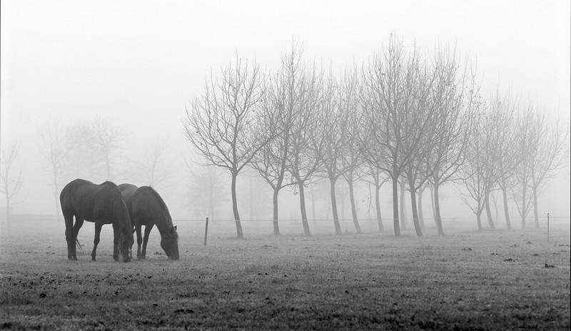 Neblina equina