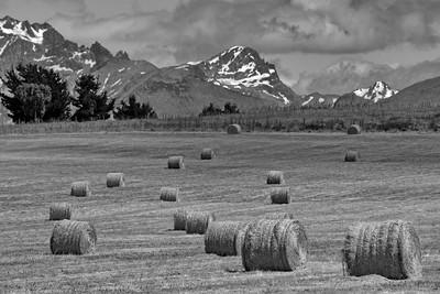 Fardos en Patagonia Argentina
